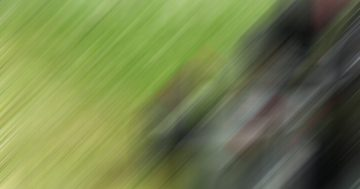 The Best Time to Reseed Your Lawn